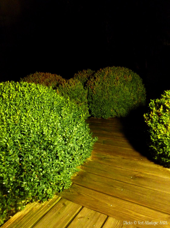 Terrasse en bois éclairée avec massif de buis boules, Buxus sempervirens