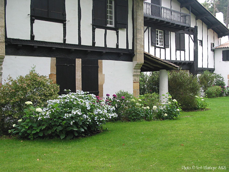 Massif d'hortensias, hydrangea, et gazon, dans une villa neobasque