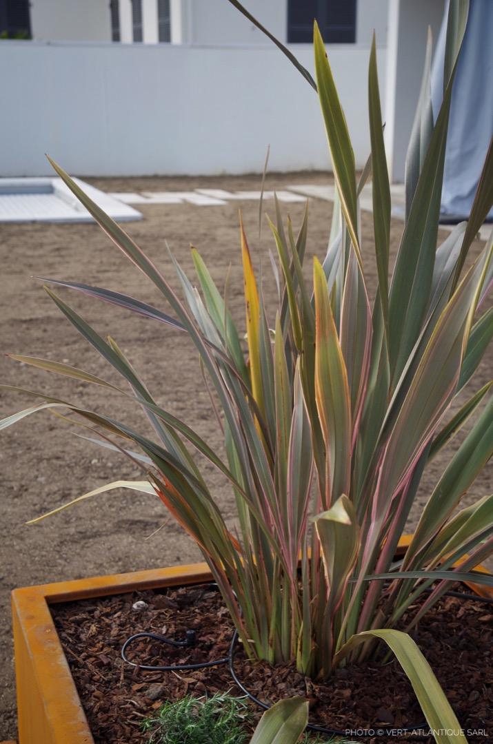 Phormium-Jardiniere-Acier-Corten